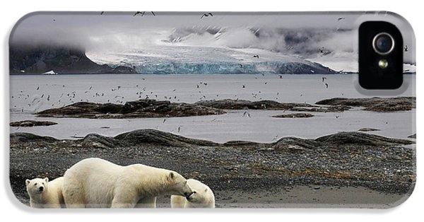 Polar Bear iPhone 5s Case - Birds by Mathilde Collot