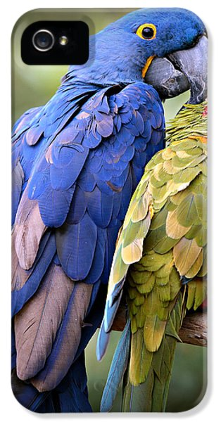 Macaw iPhone 5s Case - Birds Of A Feather by Stephen Stookey