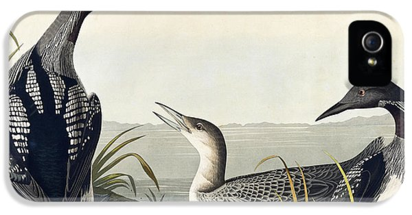 Loon iPhone 5s Case - Black Throated Diver  by John James Audubon