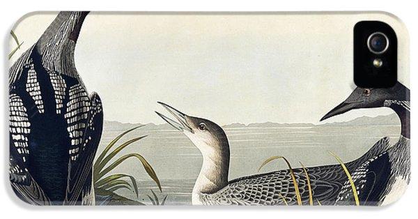Black Throated Diver  IPhone 5s Case by John James Audubon