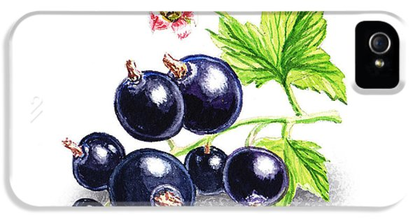 Blackcurrant Still Life IPhone 5s Case by Irina Sztukowski