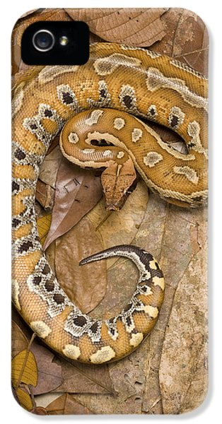 Blood Python IPhone 5s Case