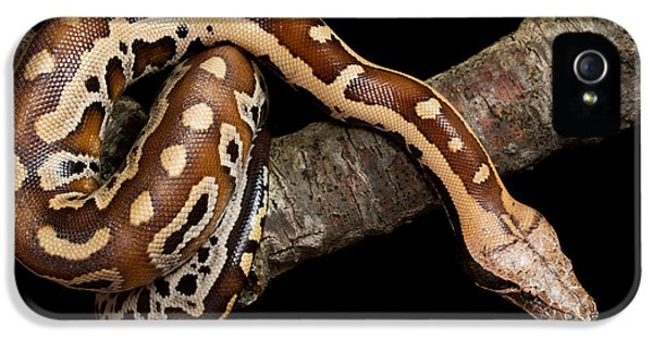 Blood Python Python Brongersmai IPhone 5s Case by David Kenny