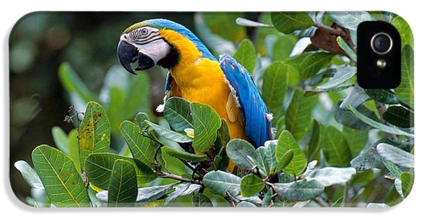 Blue And Yellow Macaw IPhone 5s Case by Art Wolfe