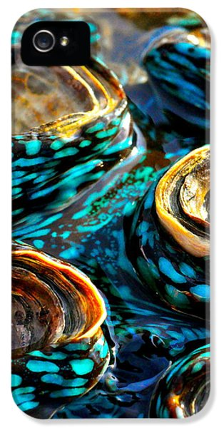 Far North Queensland iPhone 5s Case - Blue Clams by Casey Herbert