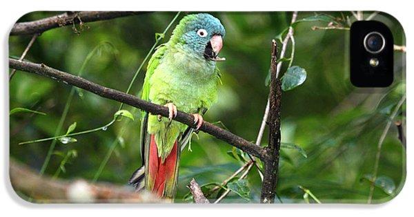 Blue Crowned Parakeet IPhone 5s Case by James Brunker