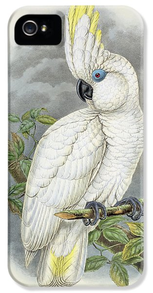Blue-eyed Cockatoo IPhone 5s Case by William Hart