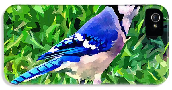 Blue Jay IPhone 5s Case by Stephen Younts