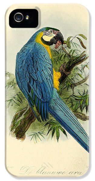 Blue Parrot IPhone 5s Case
