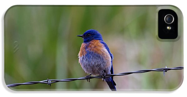 Bluebird On A Wire IPhone 5s Case by Mike  Dawson