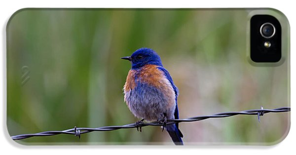 Bluebird On A Wire IPhone 5s Case