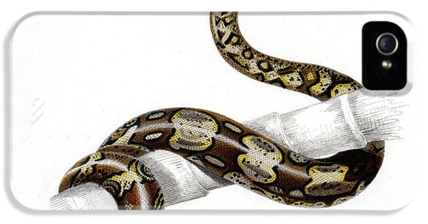 Boa Constrictor IPhone 5s Case by Collection Abecasis