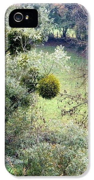 Mistletoe Ball IPhone 5s Case