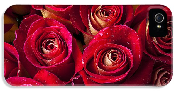 Rose iPhone 5s Case - Boutique Roses by Garry Gay