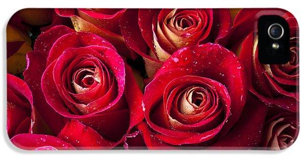 Boutique Roses IPhone 5s Case