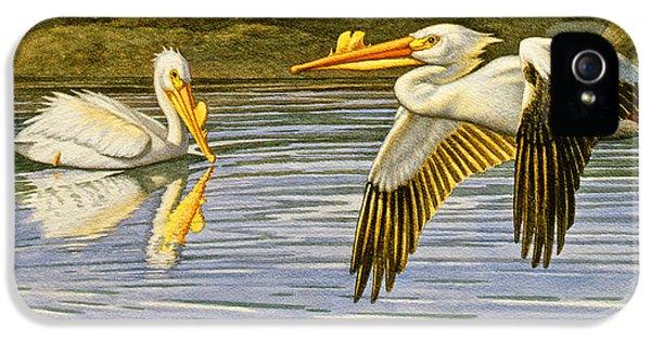 Pelican iPhone 5s Case - Breeding Season- White Pelicans by Paul Krapf