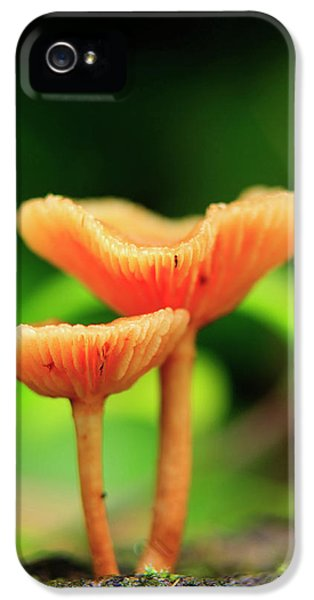 Far North Queensland iPhone 5s Case - Bright Orange Mushrooms In The Heart by Paul Dymond