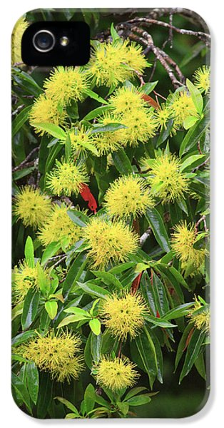 Far North Queensland iPhone 5s Case - Bright Yellow Wattle Flowers Bloom by Paul Dymond