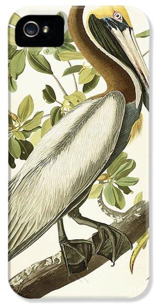Pelican iPhone 5s Case - Brown Pelican by John James Audubon
