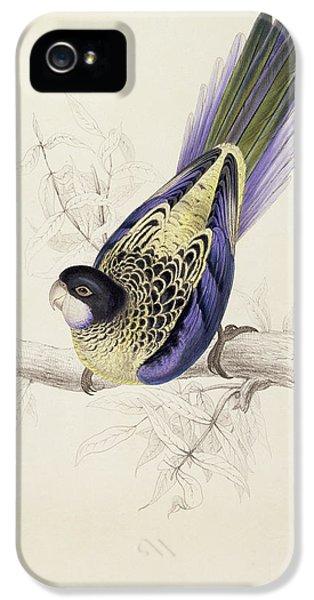 Browns Parakeet IPhone 5s Case