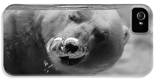 Polar Bear iPhone 5s Case - Bubbles by C.s. Tjandra