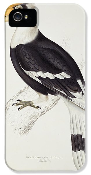 Great Hornbill IPhone 5s Case by John Gould