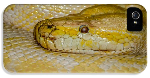 Burmese Python IPhone 5s Case by Ernie Echols