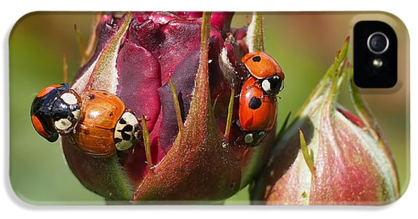 Busy Ladybugs IPhone 5s Case by Rona Black