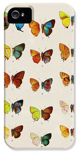 Butterfly Plate IPhone 5s Case by Pati Photography