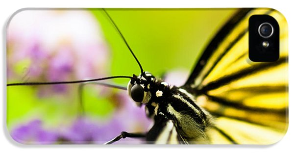 Butterfly IPhone 5s Case by Sebastian Musial