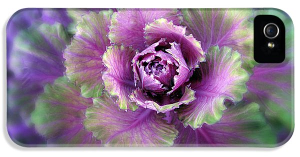 Cabbage Flower IPhone 5s Case by Jessica Jenney