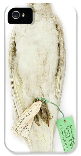 Cockatoo iPhone 5s Case - Cacatua Sanguinea by Natural History Museum, London