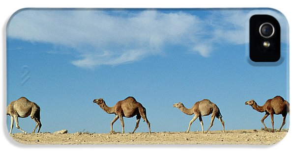 Camel Train IPhone 5s Case by Anonymous