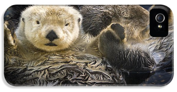 Captive Two Sea Otters Holding Paws At IPhone 5s Case