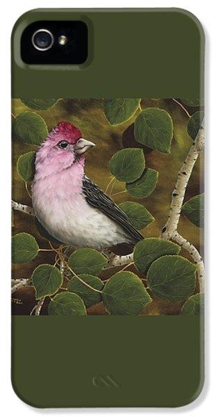 Cassins Finch IPhone 5s Case by Rick Bainbridge