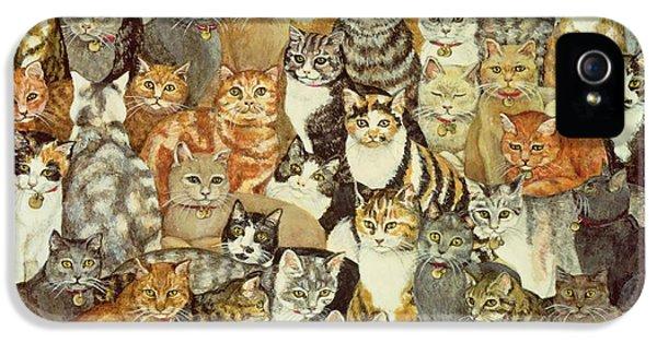 Cat Spread IPhone 5s Case