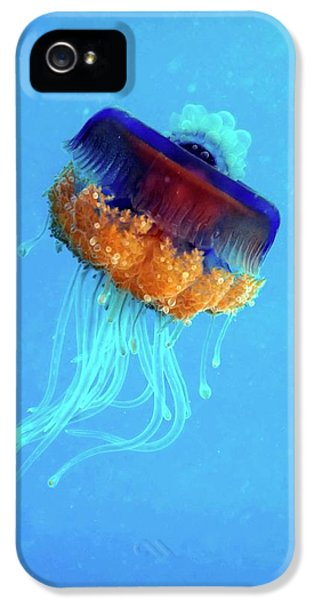 Cauliflower Jellyfish IPhone 5s Case by Louise Murray