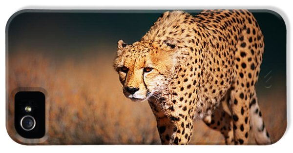 Cheetah iPhone 5s Case - Cheetah Approaching From The Front by Johan Swanepoel