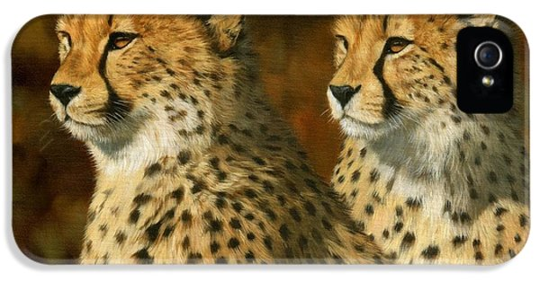 Cheetah Brothers IPhone 5s Case by David Stribbling