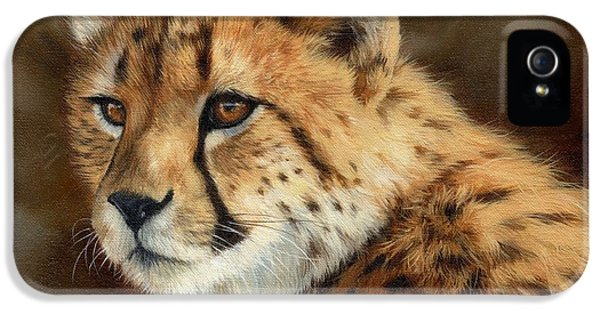 Cheetah IPhone 5s Case by David Stribbling