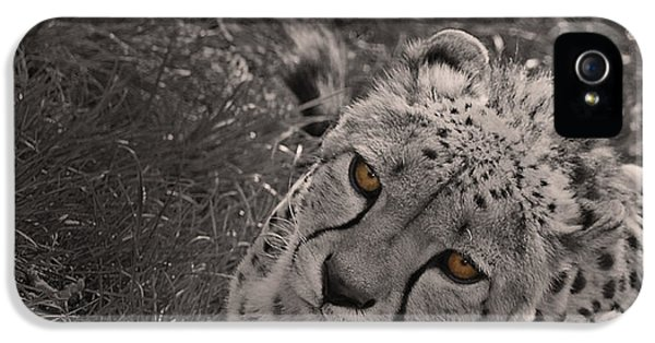 Cheetah Eyes IPhone 5s Case by Martin Newman