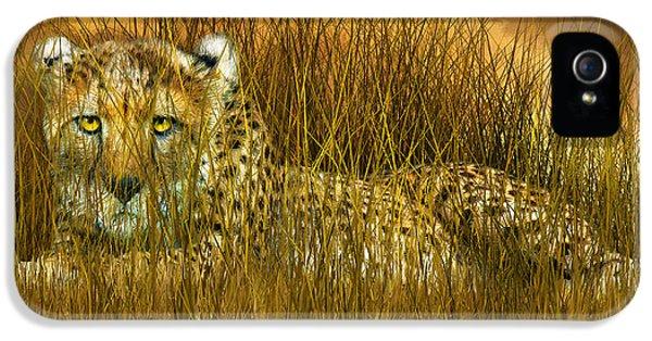 Cheetah - In The Wild Grass IPhone 5s Case by Carol Cavalaris
