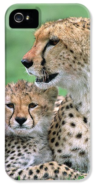 Cheetah iPhone 5s Case - Cheetah Mother And Cub by Yva Momatiuk John Eastcott