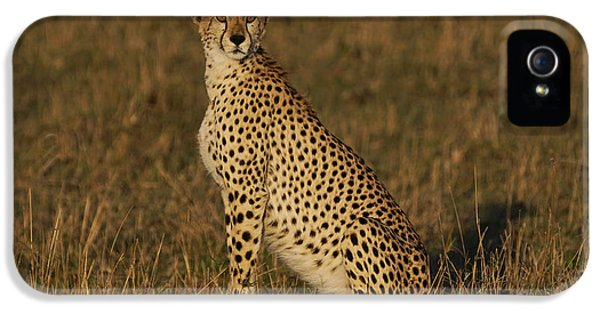 Cheetah On Savanna Masai Mara Kenya IPhone 5s Case by Hiroya Minakuchi