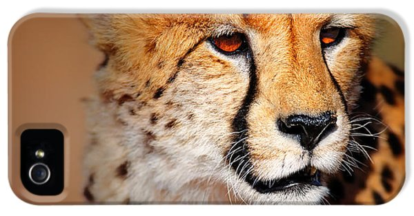 Cheetah iPhone 5s Case - Cheetah Portrait by Johan Swanepoel