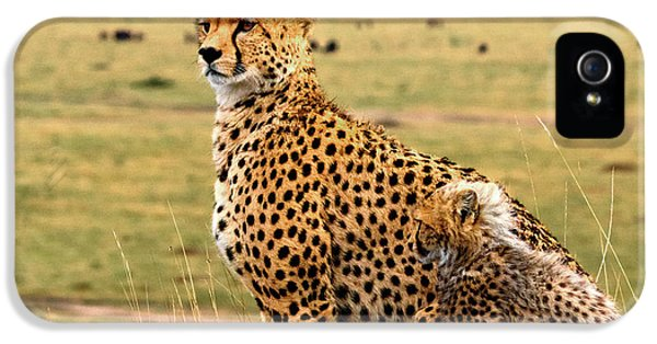 Cheetahs IPhone 5s Case by Babak Tafreshi