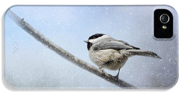 Chickadee In The Snow IPhone 5s Case by Jai Johnson