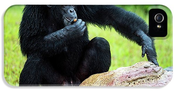 Chimpanzees IPhone 5s Case