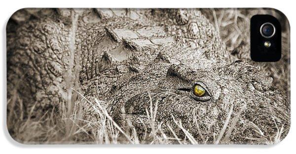 Crocodile iPhone 5s Case - Close Crocodile  by Delphimages Photo Creations
