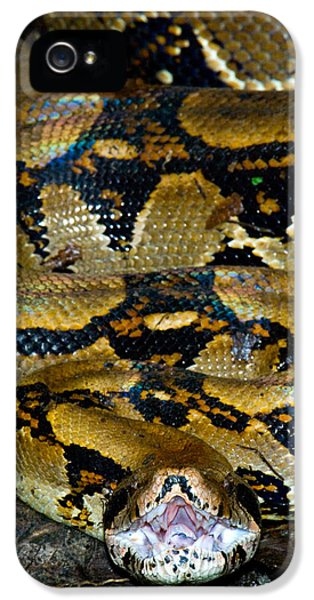 Close-up Of A Boa Constrictor, Arenal IPhone 5s Case by Panoramic Images